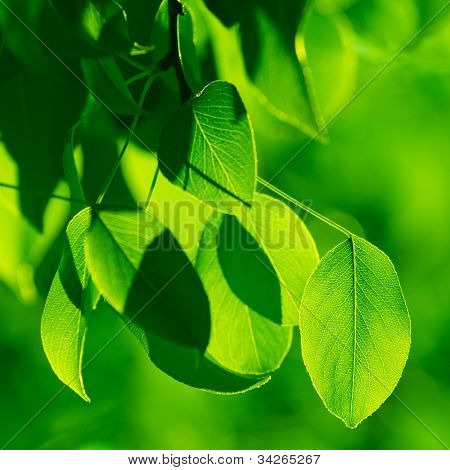 Green foliage in the morning sun beams