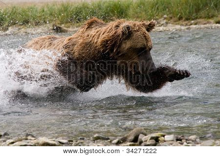 Grizzly Chasing Down Dinner