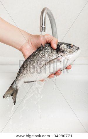 Hand hält Goldbrasse Fischfutter