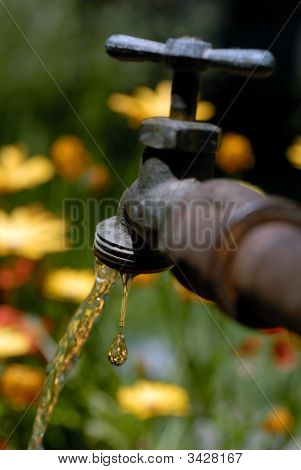 Dripping Springtime Faucet