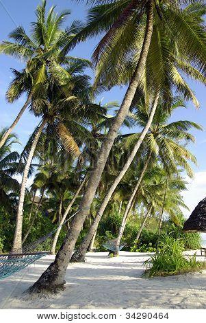 Tropical Beach With Hammocks In A Resort