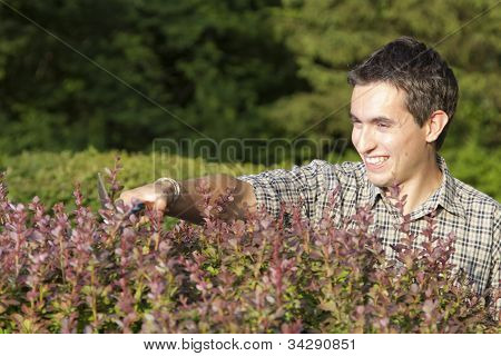 Smilling man cutting hedges DOF