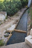 picture of loquat  - A traditional irrigation ditch flowing through a loquat plantation - JPG