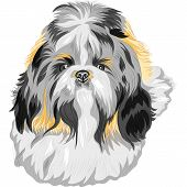 foto of dog breed shih-tzu  - color sketch of the dog Shih Tzu  - JPG