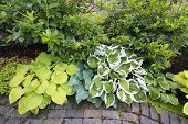 image of molly  - Variety of Hostas Plants and Shrubs Along Garden Brick Path Walkway - JPG