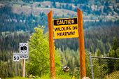 Caution Wildlife On Roadway, Yellow Warning Sign Between Two Wooden Poles, Speed Radar And 50 Km Spe poster