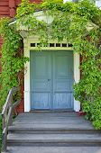 picture of front door  - Picturesque blue door of a home covered by plants - JPG