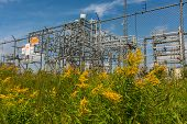 Golden Rod Flowers In A Natural Area Against The Exterior Electric Metal Fence Of An Electrical Subs poster
