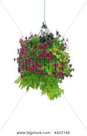 Flower Basket Hanging