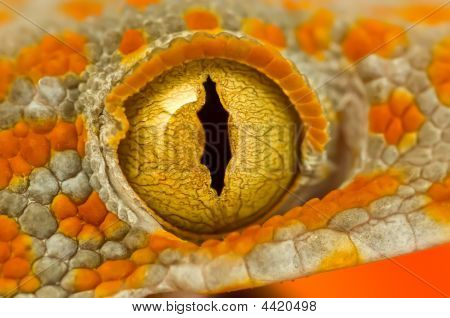 Eye Of A Tokay Gecko