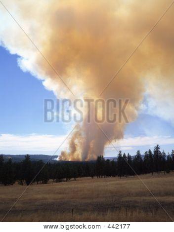 Forest Fire (vertical)
