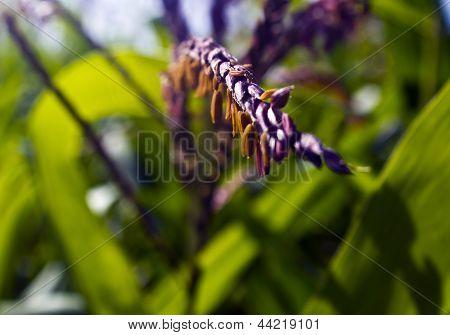 corn seeds in focus