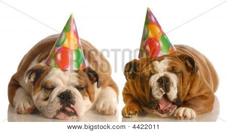 Birthday Bulldogs
