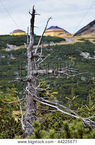 Dead tree in karkonosze mountains in Poland