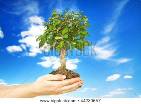 One plant in female hand and sky on background