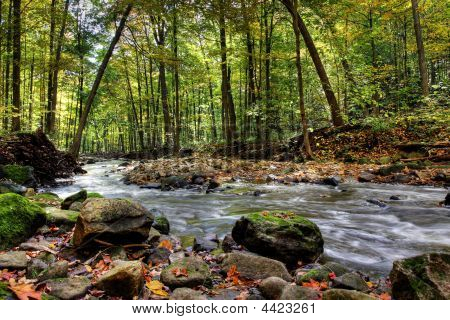 Small Forest River