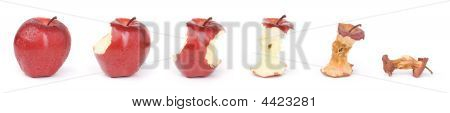 Apple In A Sequence From Fresh Till Dried