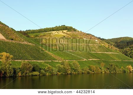 The Vineyards Along The River Moselle,germany