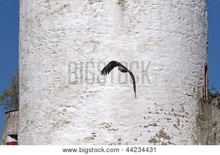 Shadow of an African Fish Eagle