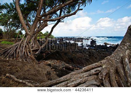 Tree-lined Coast