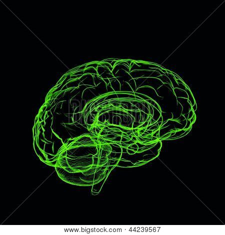 Xray Green Brain