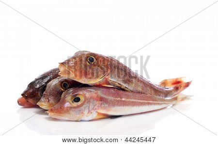 some surmullets or striped red mullets on a white background