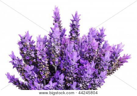 closeup of a bouquet of lavender flowers on a white background