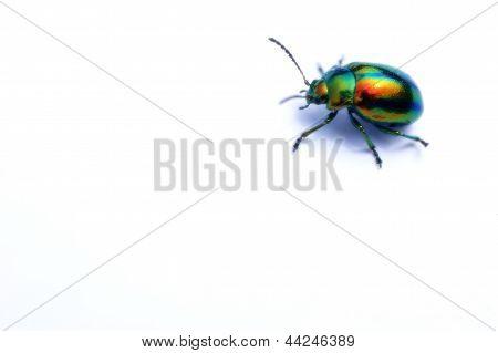 Farbige Käfer