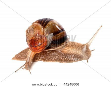 Big And Small Snails