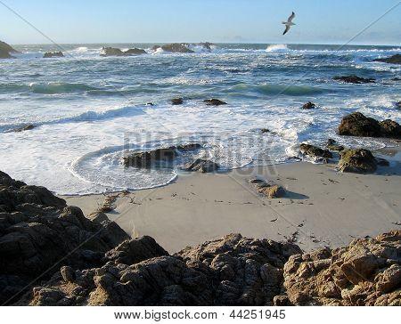 Sea gull and shore