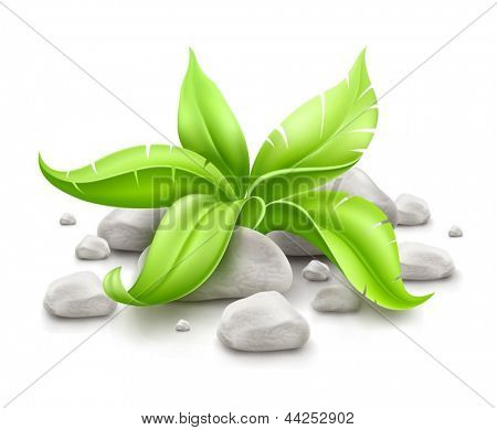 plant with green leaves in stones isolated on white background. EPS10 vector illustration. Gradient mesh used.