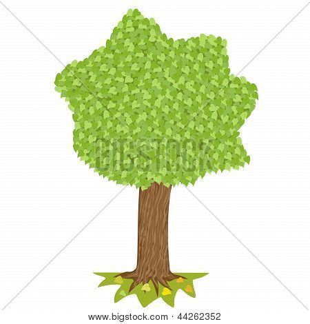 Tree  With Green Crown