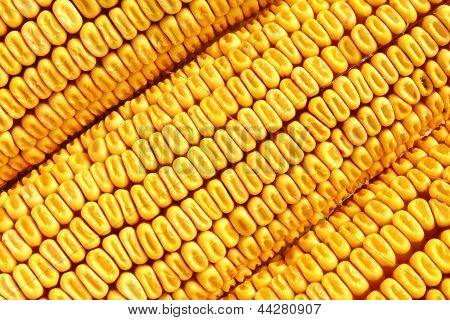 Corn cobs, grains