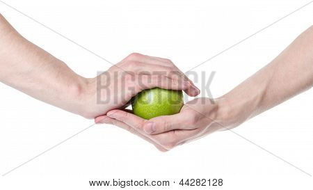 Adult Man Hands Holding Green Apple
