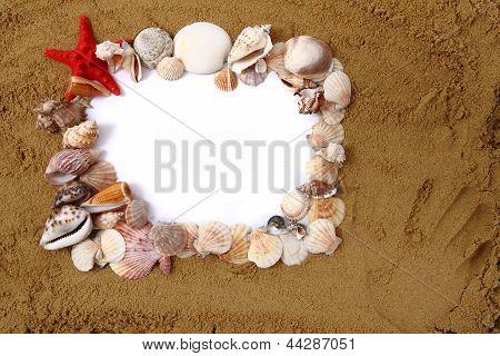 Shells, Sand, White Paper
