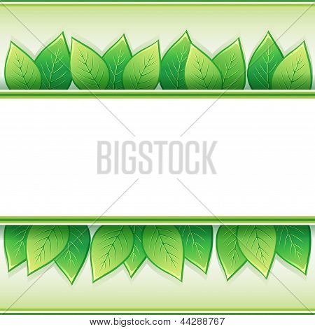 Eco Background With Fresh Leaves