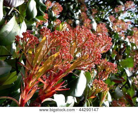 Baum Blume