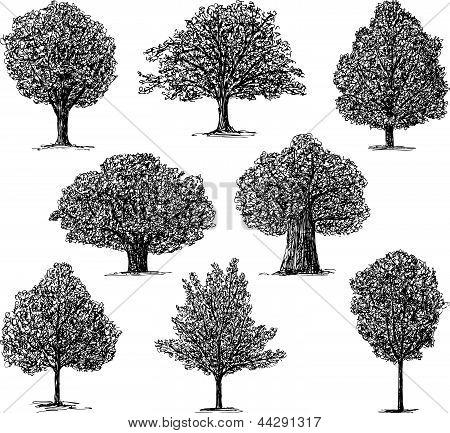Trees.eps