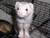 image of ferrite  - ferrit coming out of cage - JPG