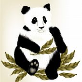 Cute Panda Bear On A White Background