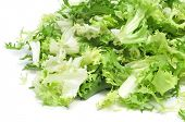 foto of endive  - some chopped leaves of escarole endive on a white background - JPG