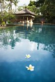stock photo of frangipani  - white frangipani flowers flaoting on the surface of resort spa pool in ubud bali indonesia - JPG