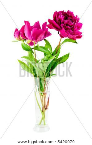 Pink Peony In Vase