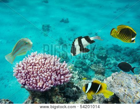 Coral Fishes