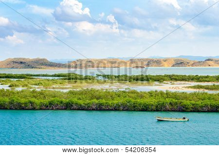 Mangroves And Boat