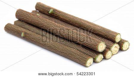 Medicinal Neem Twigs