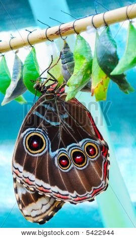 Exotic Tropical Butterfly