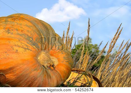 Pumpkin Patch Close Up