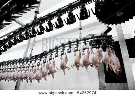 Poultry Meat Processing