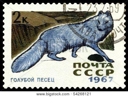 Vintage  Postage Stamp.  Arctic Blue Fox.